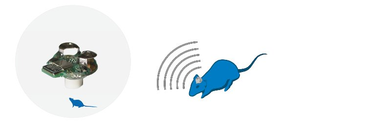 SPS/STP regional meeting rodentPACK 800px
